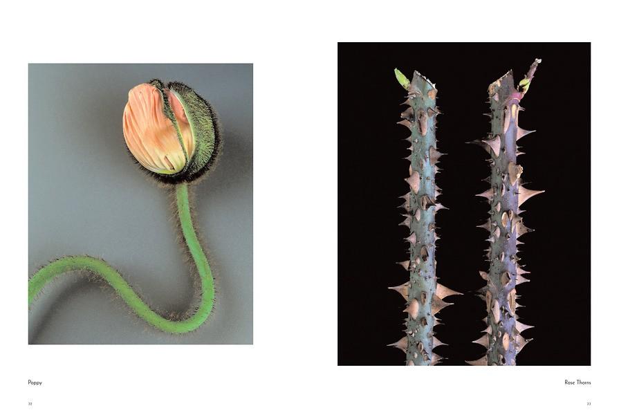 Fleur 7012