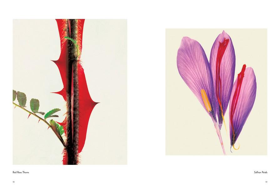 Fleur 7013