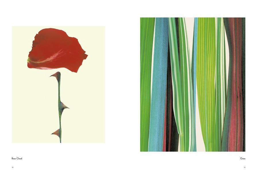 Fleur 7014